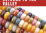 The Great American Seed Up Returns to the Valley