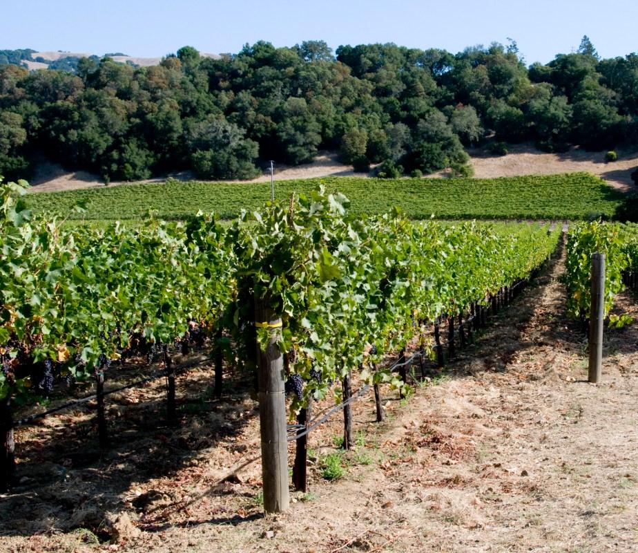 Field Stone Winery