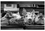 Bink's Pig's Head Dinner