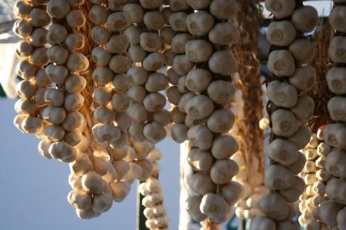 2nd Annual Garlic Festival