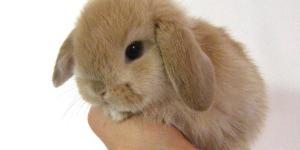 Harga Kelinci Mini