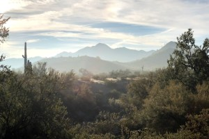 image of cactus and mountains for hikers and mountain bikers in Phoenix