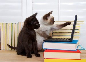 Cats checking on their local seo