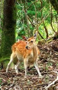 1406_deer