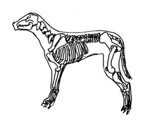 Veterinary Chiropractics,  Phoenix Rising Veterinary Care