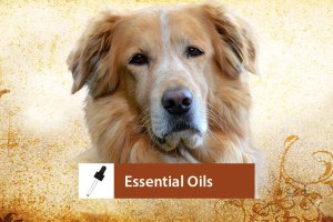 Essential Oil Therapy