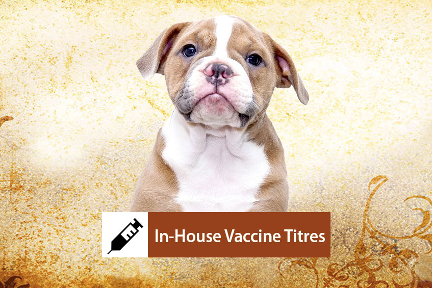 In-house Vaccine Titre Testing