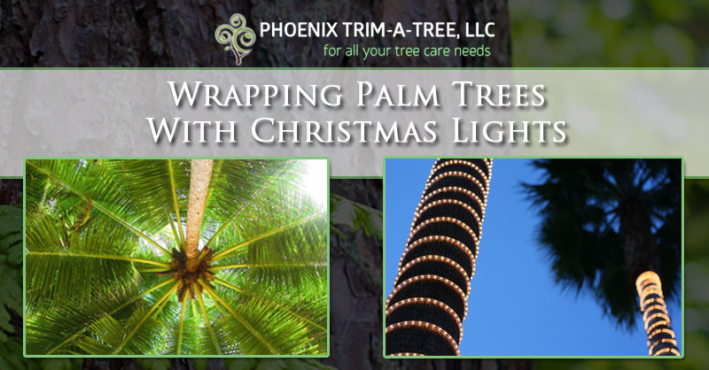 wrapping palm trees with christmas