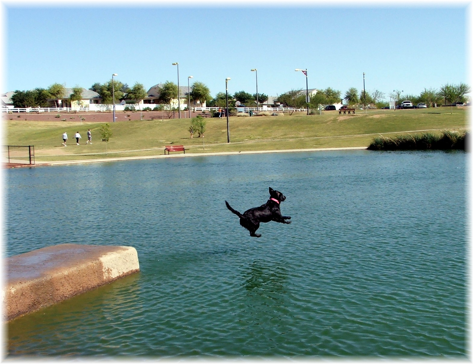Gilberts Cosmo Dog Park features waterfront activities