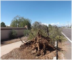 Fallen tree on McQueen
