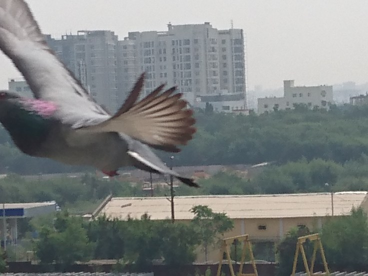 Sony Xperia Z5 - Bird Captured in Full Zoom