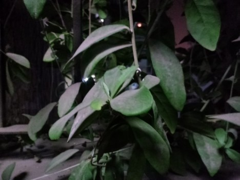 Asus Zenfone Zoom - Low Light Normal Mode