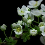 Macro time-lapse: dal seme alla fioritura in pochi minuti