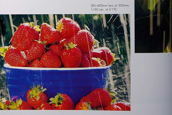 Strawberries in the Rain
