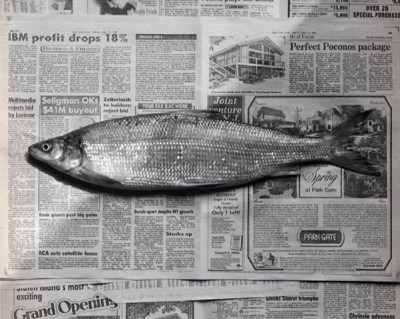 Fish 1985 Food Photography of Robert Mapplethorpe