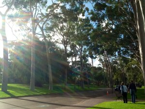 Tall gum trees line both sides of the road giving it such beauty and splendor.
