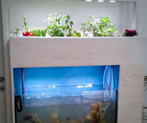 indoor Aquaponik