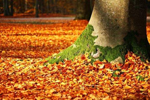 photographier l'automne au ras du sol