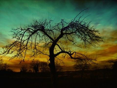 arbre d'automne sans feuille