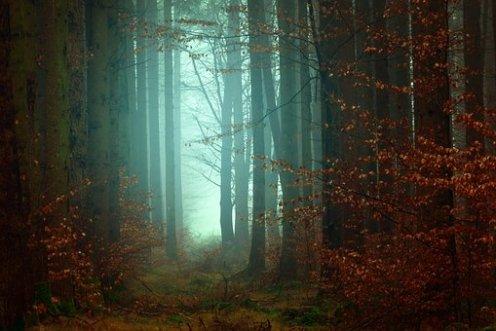 photographier la brume en automne