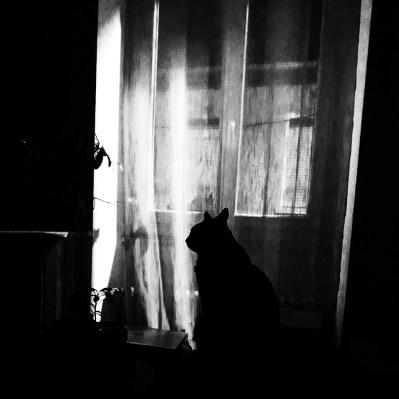 contre-jour en noir & blanc