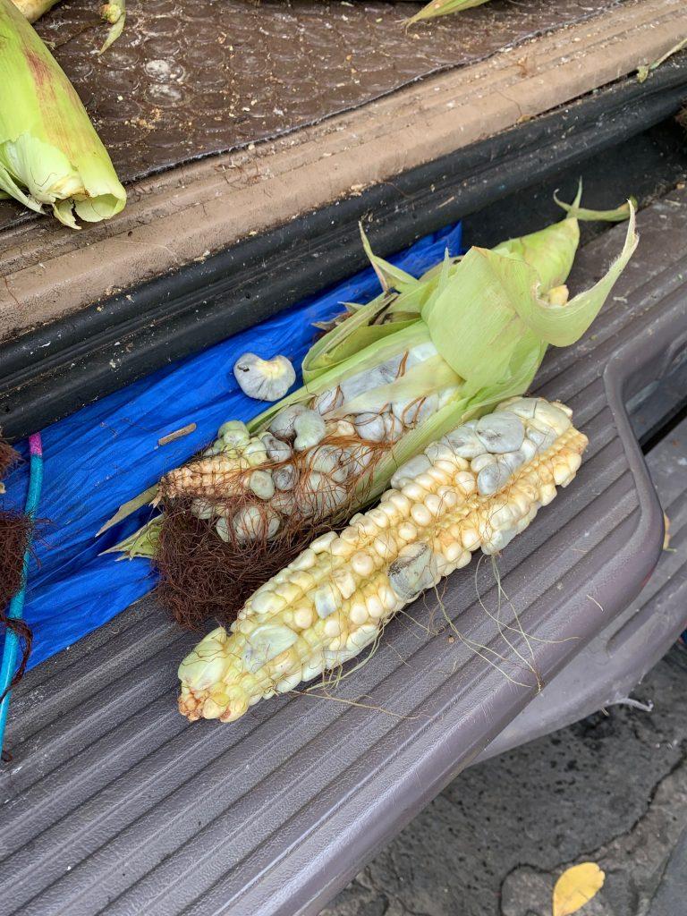 """Black Gold"" Corn, Tepoztlan, Mexico ©2019, Cyndie Burkhardt"