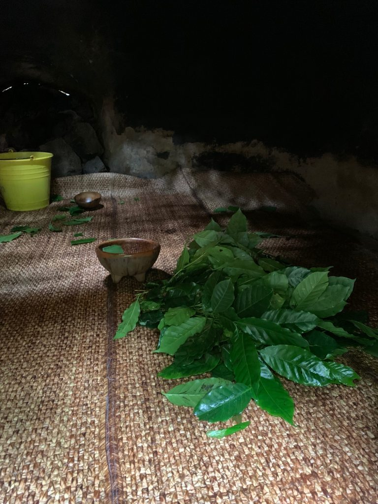 Leaves and aloe inside the temazcal, Tepoztlan, Mexico ©2019, Cyndie Burkhardt.