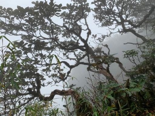 Fansipan Mountain, Sapa, Vietnam ©2019, Cyndie Burkhardt.