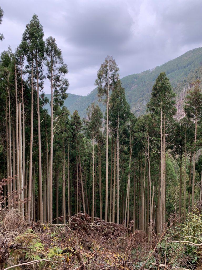 Mt. Kurama, Japan ©2020, Cyndie Burkhardt.