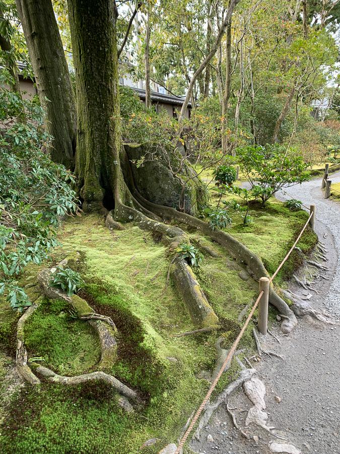 Murin-an Zen Garden, Kyoto, Japan, ©2020, Cyndie Burkhardt.