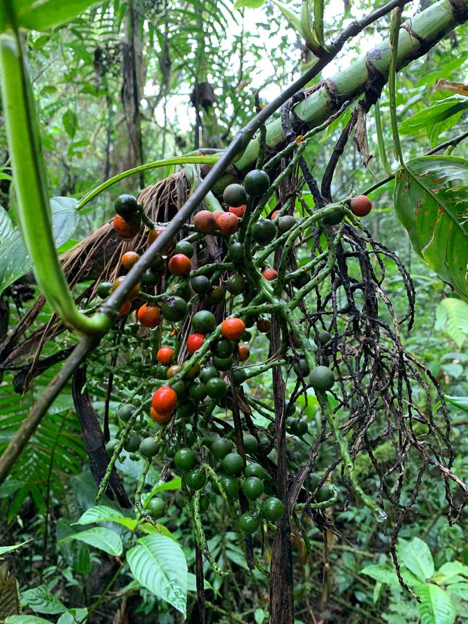 Plants at Angels Falls Mountain, Envigado, Colombia, ©2019, Cyndie Burkhardt.
