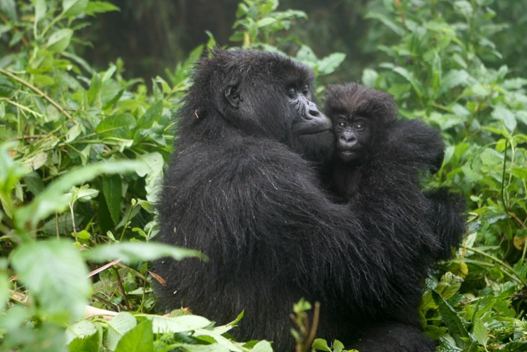 Virunga Mountains, Rwanda ©Cyndie Burkhardt.