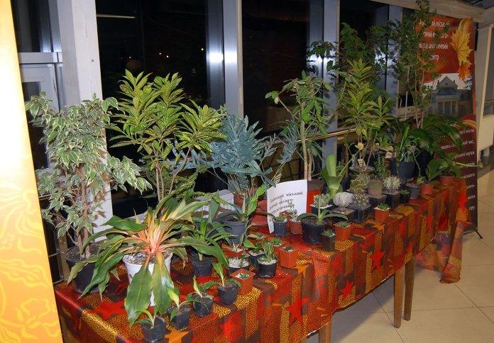 Виставка узамбарських фіалок, стрептокактусів, кактусів та сукулен