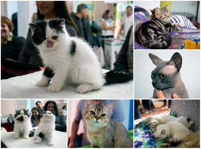 Міжнародна виставка котів у Львові в 20 фотографіях