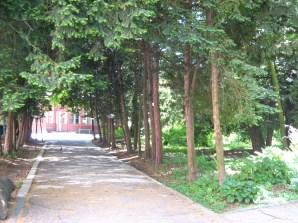 Дендрарій на місці Крайової лісної школи. Сучасне фото.