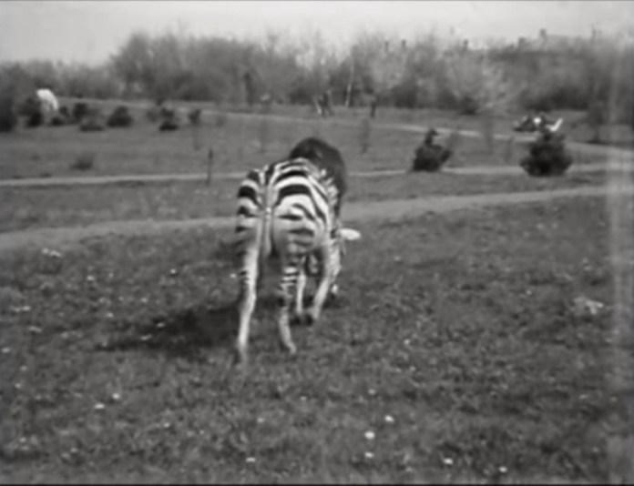 Зоопарк на Погулянці. Кадр з відеозапису 1970-х рр.