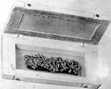 Коробочка із піддослідними вошами, 1941 – 1942 роки