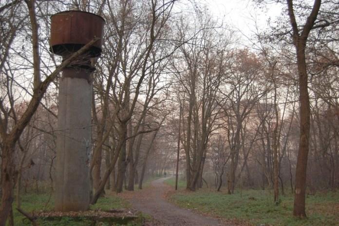 Білогорський ліс поблизу П'ятого парку, що став місцем одразу двох авіакатастроф