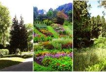 Три львівські ботанічні сади: історія і сучасність
