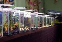 У Львові відкрили другу загальноміську виставку міні-акваріумів «Барви гуппі 2016»