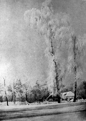Ярослав Масляк. Зимовий пейзаж, 1939 р. (Світло й Тінь. – 1939. – Ч. 1)