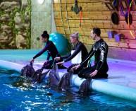"""Чорноморські дельфіни комплексу """"Оскар"""" та їх тренери. Фото: Ксенія Янко"""