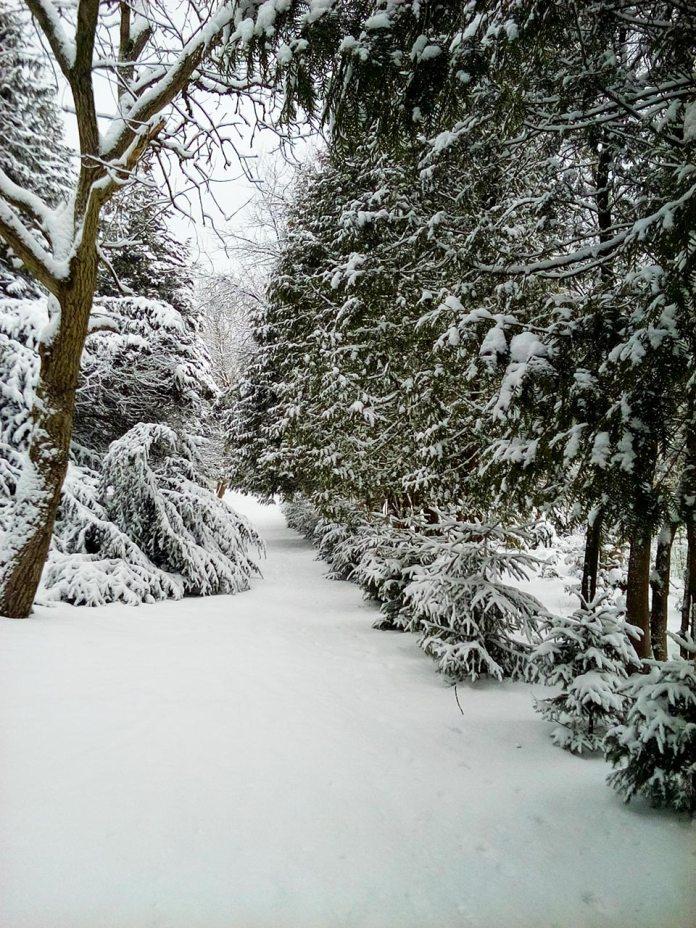 Одна зі стежок парку, фото Ірина Хлян.