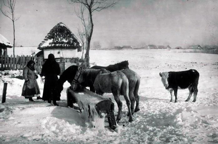 Жолоб на водопій для худоби