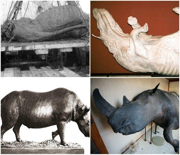 Мамонт і носоріг у тундро-степах Галичини