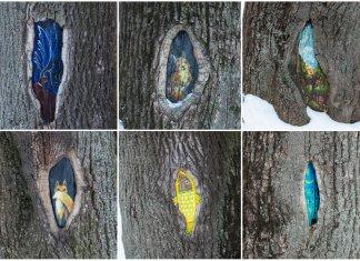 Шість картин одного львівського дерева