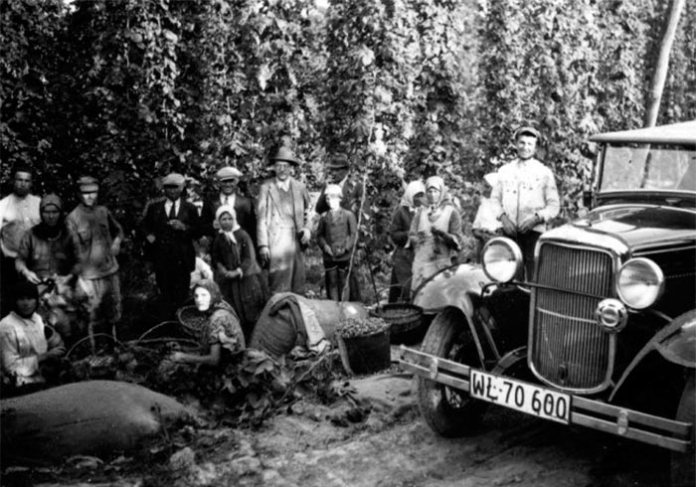 Збирання хмелю на Волині, 1920-ті роки. Тут і далі фото з nac.gov.pl