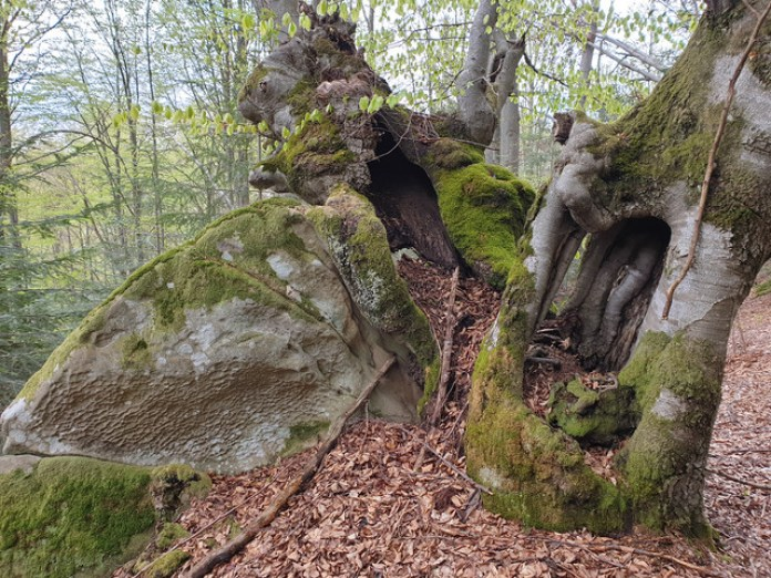 Дерево так покрамсало ніби саме тут граната розірвалася