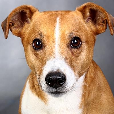 , Hundeshooting – Dein bester Freund im Rampenlicht