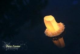 pool-lantern2